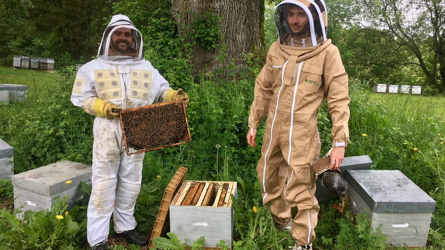 apiculteur haute garonne
