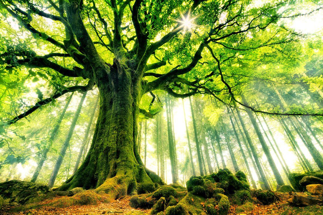 L'intelligence des plantes et les bienfaits des arbres