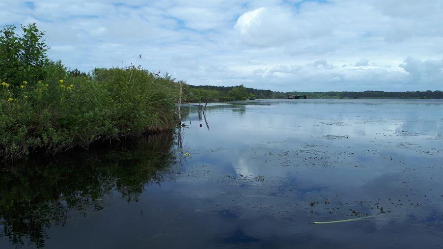 étang Blanc, dans le sud des landes