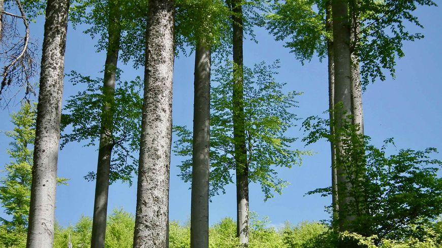 Natzwiller, la forêt