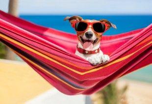 Bande à Servane chien en vacances