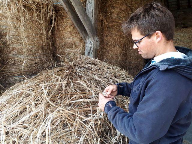 Marien Sablery, jeune agriculteur bio, cultive 25 hectares de chanvre sur son exploitation