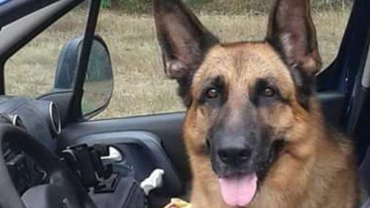 Erone, un berger allemand, est mort à l'âge de neuf ans