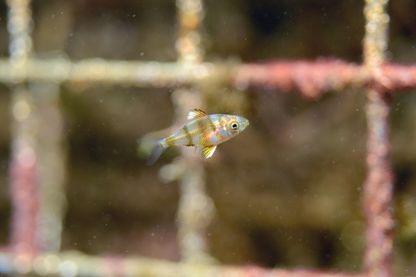 Des ports en méditerranée s'équipent de nurserie à poissons , d'autres en bretagne vont suivre