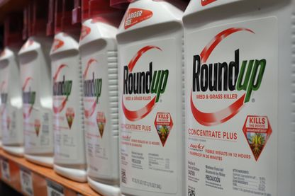Le produit phare de Monsanto-Bayer, le Roundup, au coeur d'une bataille scientifique