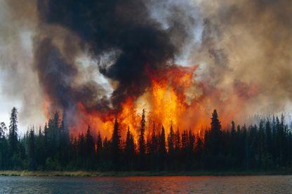 Les conséquences d'un incendie de forêt