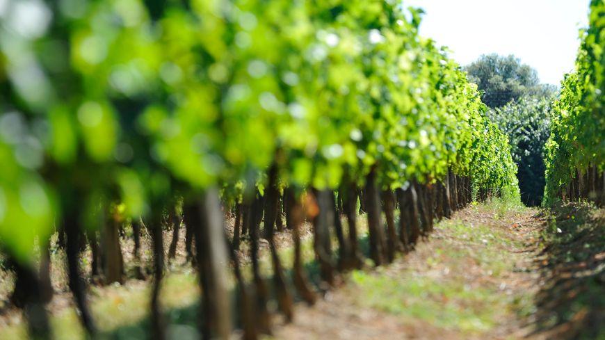 La justice a saisi dix domaines, châteaux et vignobles du Bordelais ce mercredi 27 juin