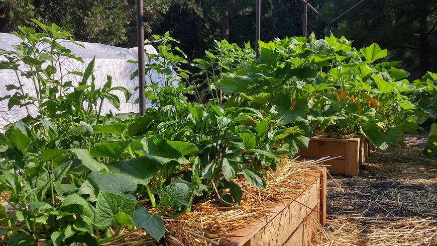 jardin légumes potagers