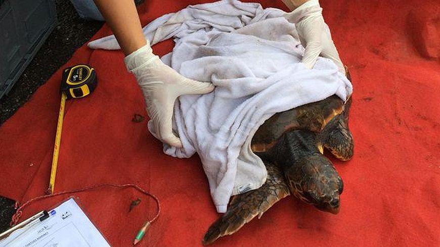 La tortue a été relâchée dans la Méditerranée après quelques soins
