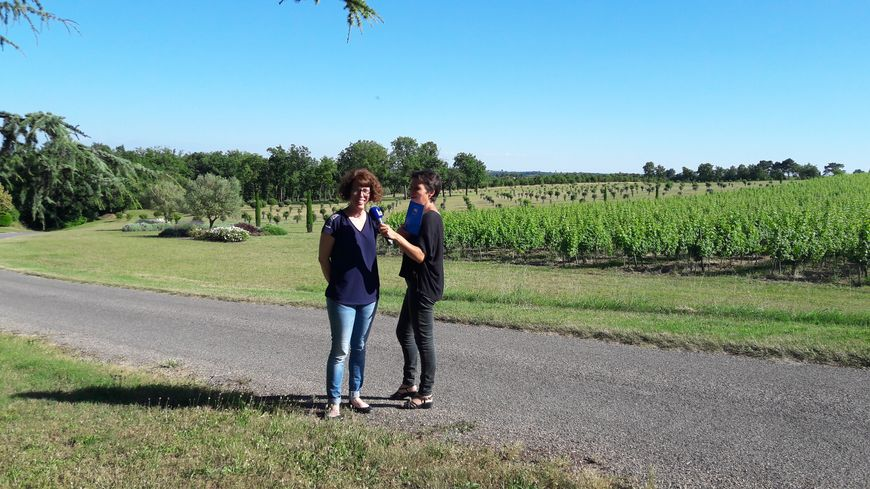 Sur le vignoble de Gaillac