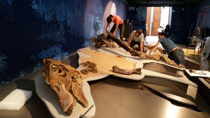 """Des socleurs remontent le squelette d'un edmontosaure, avant l'ouverture de l'exposition """"Un T-Rex à Paris"""", au Muséum national d'Histoire naturelle"""