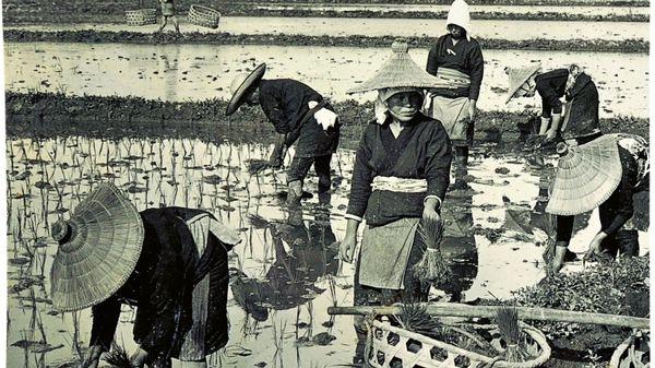 """Quelle musique voyez-vous sur la photographie: """"On a rice farm"""" de H. C. White Co ?"""