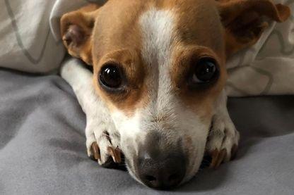 21 mai 2014, Solange a adopté son chien…