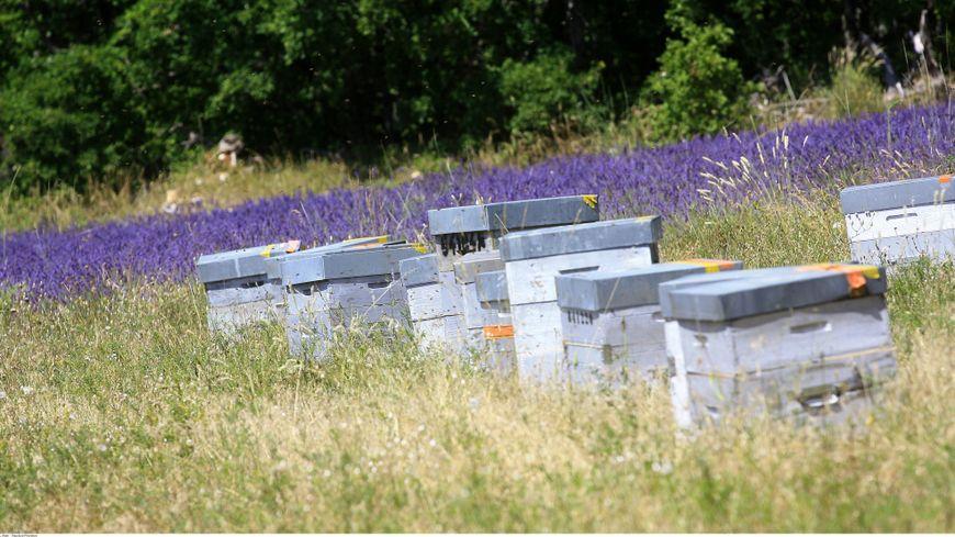 Les apiculteurs de Provence défendent avec passion essaims et biodiversité