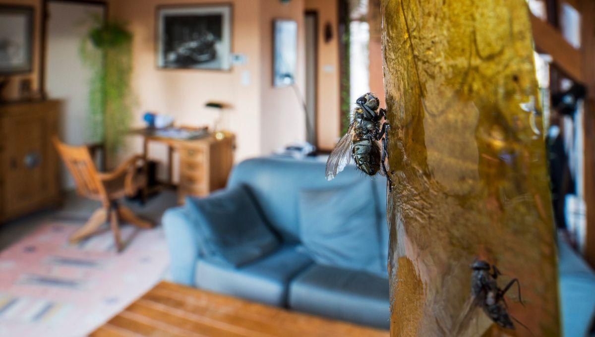 Remede De Grand Mere Contre Les Moucherons Dans La Maison pourquoi les mouches nous envahissent-elles en été ?