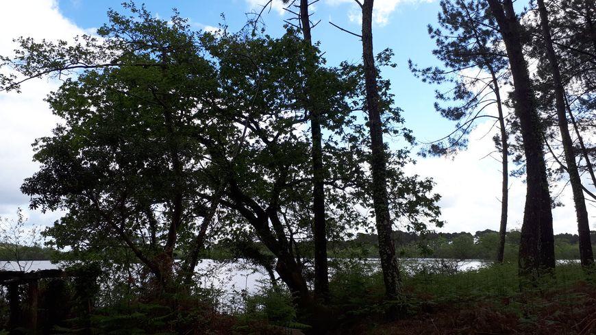 étang d'Hardy, près de Soustons, dans les Landes