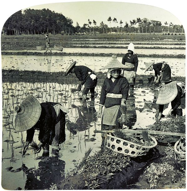 On a rice farm - transplanting the tender rice shoots - both sexes sharing the labor, Shizuoka au Japon [Repiquage du riz à Shizuoka au Japon, hommes et femmes partagent le travail] de H. C. White Co