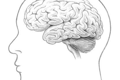 Vue latérale du cerveau humain montrant le cortex cérébral, le pont, le bulbe rachidien, le cervelet et la moelle épinière.