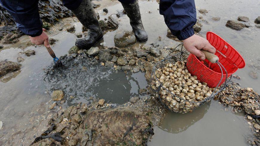 La pêche à pied est interdite alors que les grandes marées débutent