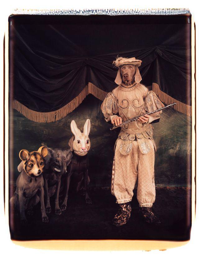 William Wegman, Tamino et sa flûte enchantée, 1996.
