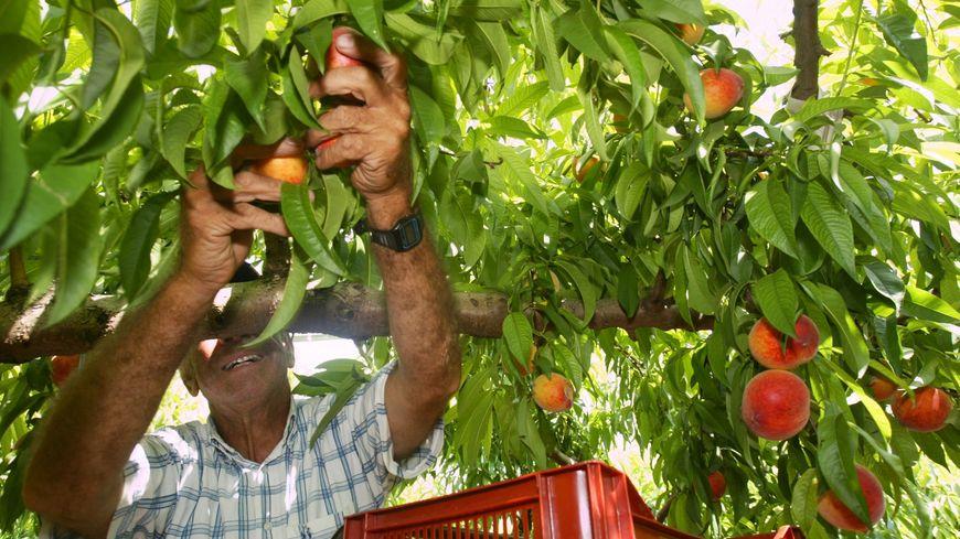 Un travailleur agricole détaché dans une exploitation agricole de Tarascon