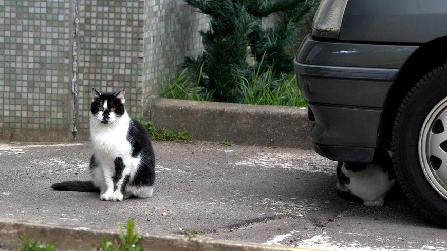 L'augmentation du nombre de chats errants n'est pas tant liée aux abandons. Le réchauffement climatique augmente leur capacité de reproduction