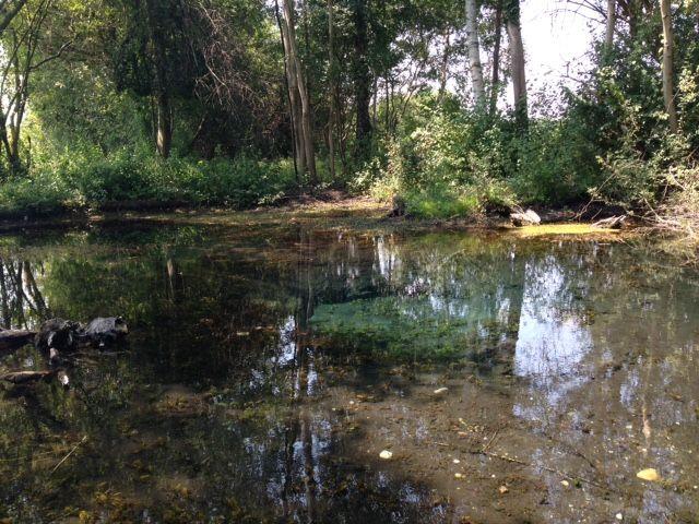 La Belle Source à Herbsheim... un lieu si paisible !