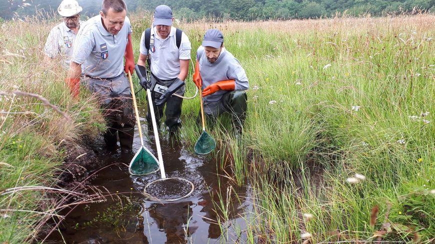 Les techniciens de l'Agence française pour la biodiversité utilisent la technique de pêche électrique pour prélever les poissons qui seront ensuite relâchés.