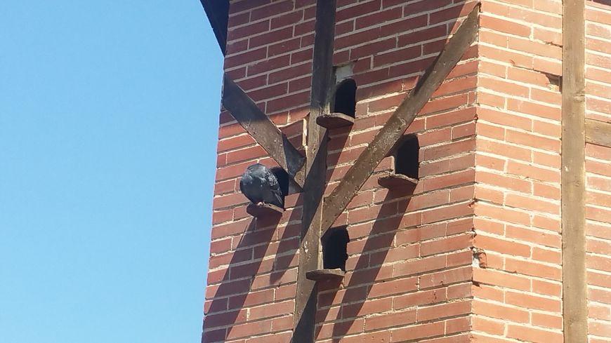 Les amoureux des pigeons, qui leurs donnent à manger, risqueront jusqu'à 450 euros d'amende