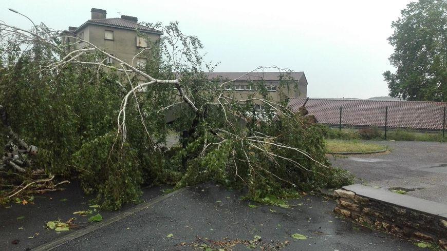 Un arbre tombé dans la cour du gymnase Clos Chassaing à Périgueux
