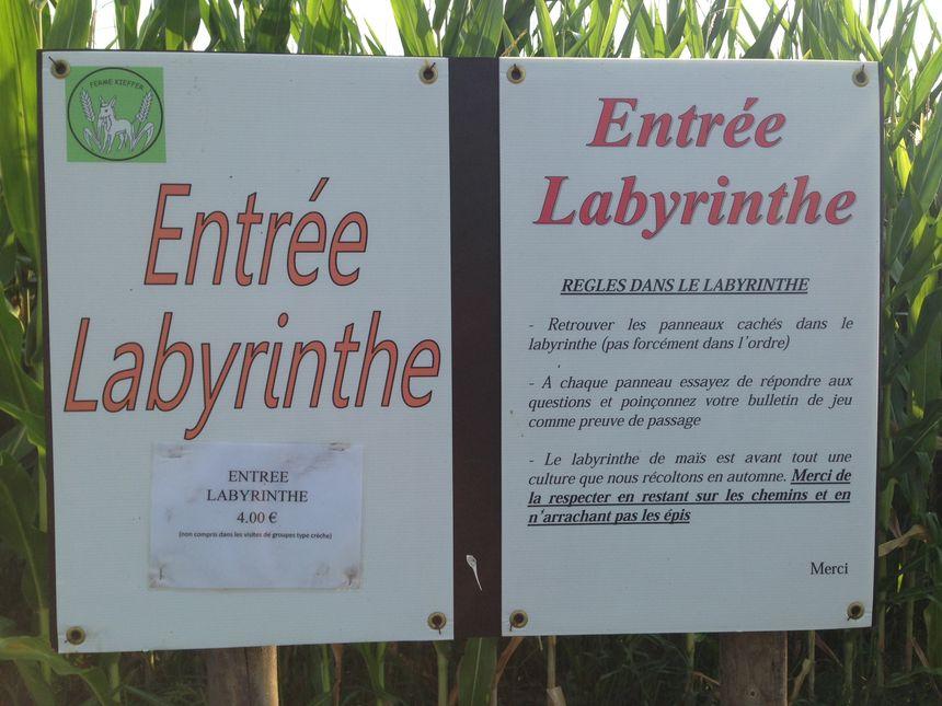 Le labyrinthe de maïs... Saurez-vous retrouver votre chemin ?
