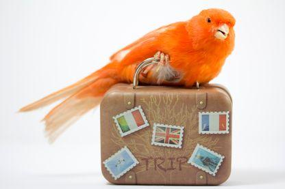 Les oiseaux, voyageurs du ciel