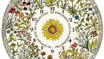 Horloge florale de Carl von Linné