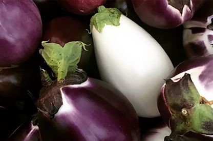 Diverses variétés d'aubergines