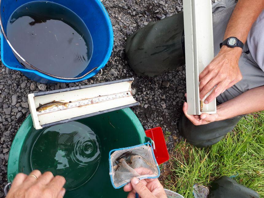 Un échantillon de trente poissons est pesé et mesuré.