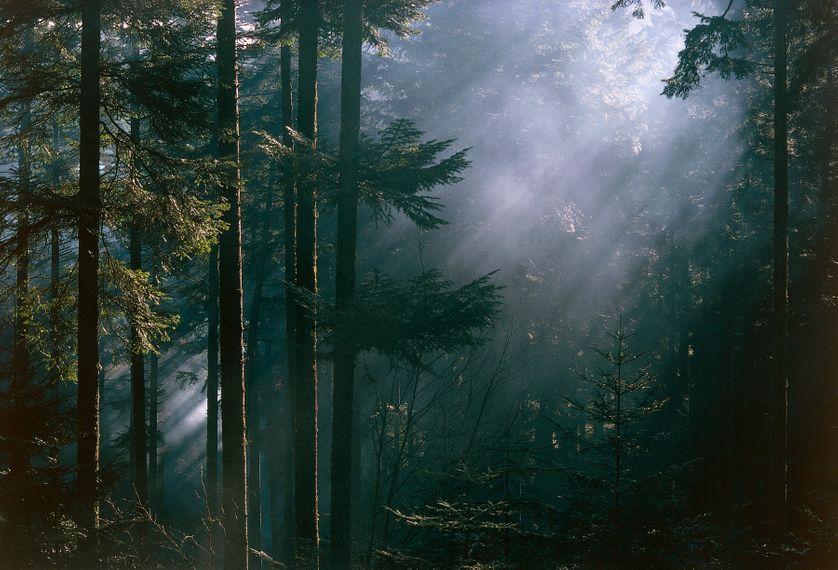 Forêt dans les Vosges