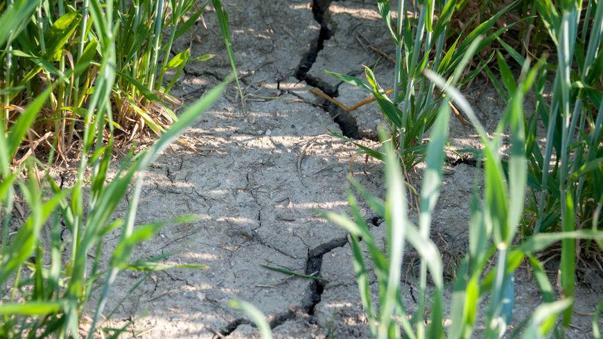 Une forte baisse des débits des cours d'eau est observée dans les Vosges (image illustration )