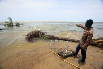 Un homme montre des cocotiers tombés à Grand Lahou le 21 avril 2018. L'érosion côtière a englouti la vieille ville et le phare