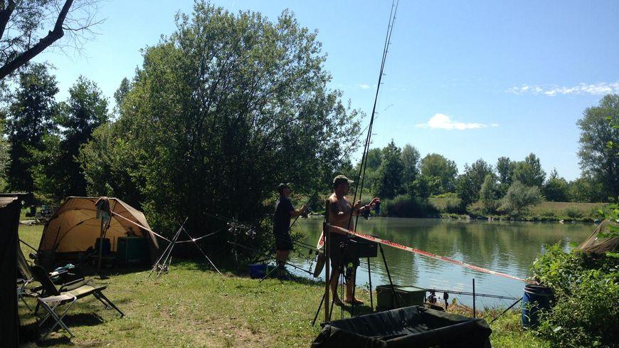 Ils pêchent la carpe jour et nuit à Andrézieux-Bouthéon.