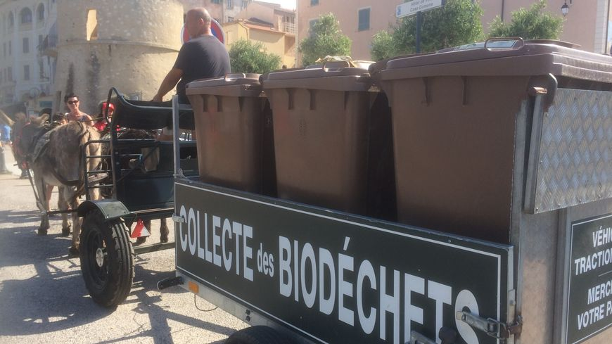 Olivier Fondacci ramasse chaque jour les biodéchets dans les rues de L'île-Rousse en compagnie de ses deux ânes