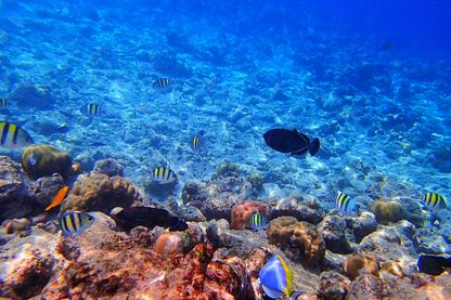 L'Océan : une biodiversité en danger