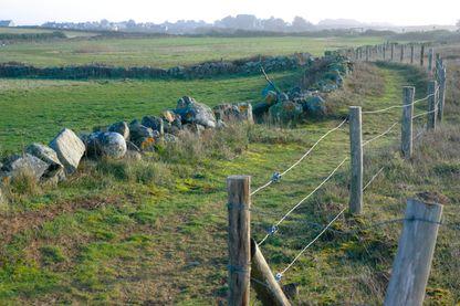 La lande bretonne