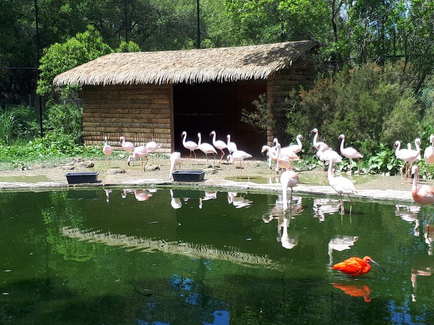 les flamants roses du zoo de Labenne