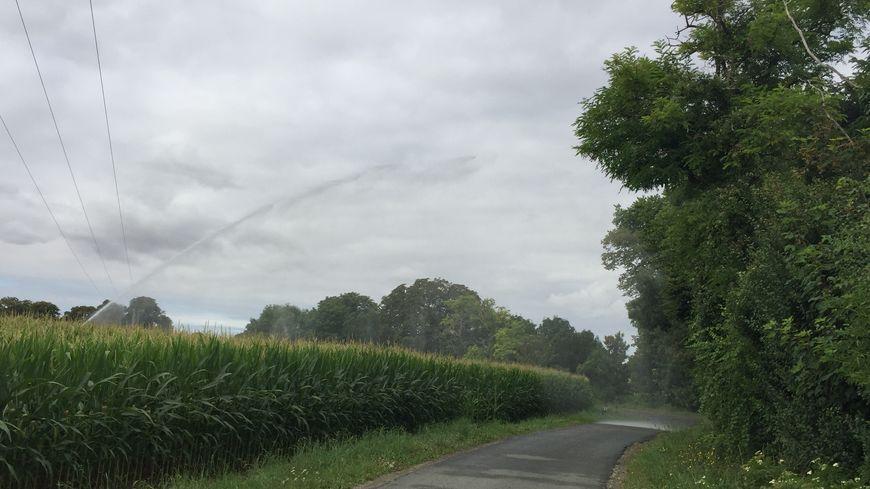 Un canon irrigue un champ de maïs.