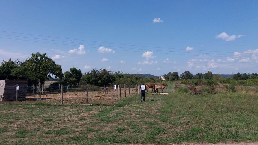Les chevaux n'avaient plus d'herbe ni de foin dans le champ où ils étaient.