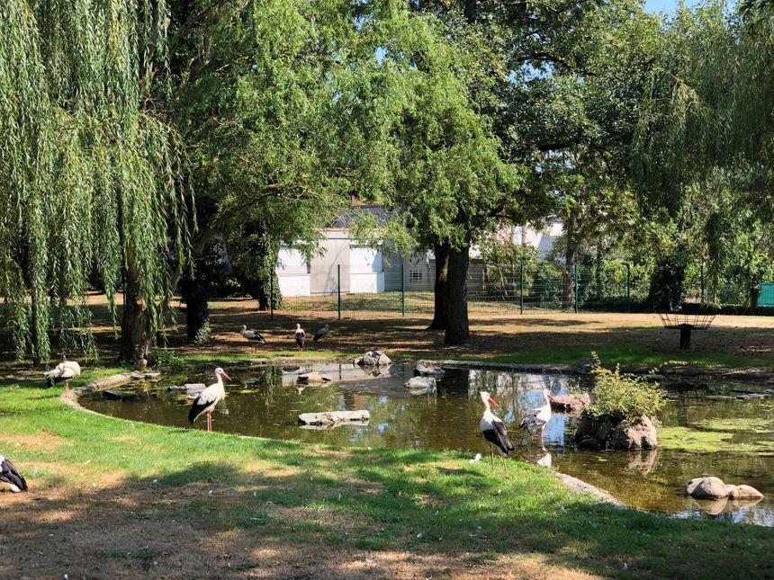 Le parc à cigognes de Cernay plaît aux petits comme aux grands !