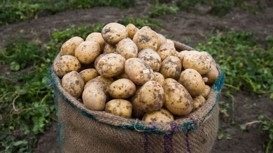 Jean-Claude et les pommes de terre.