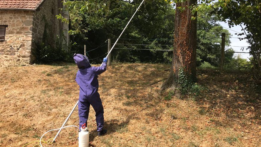 Morgan Dufrois pulvérise de l'insecticide sur un nid de frelons.