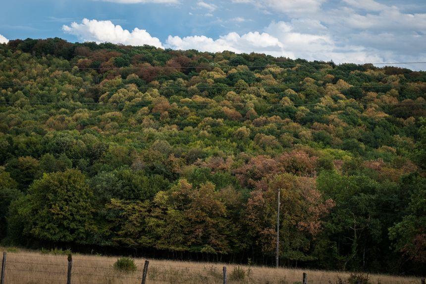 Stress hydrique des arbres en Franche-Comté