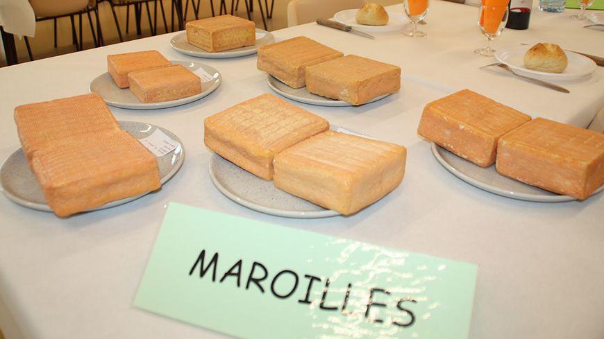 Dégustation de Maroilles Foire aux fromages